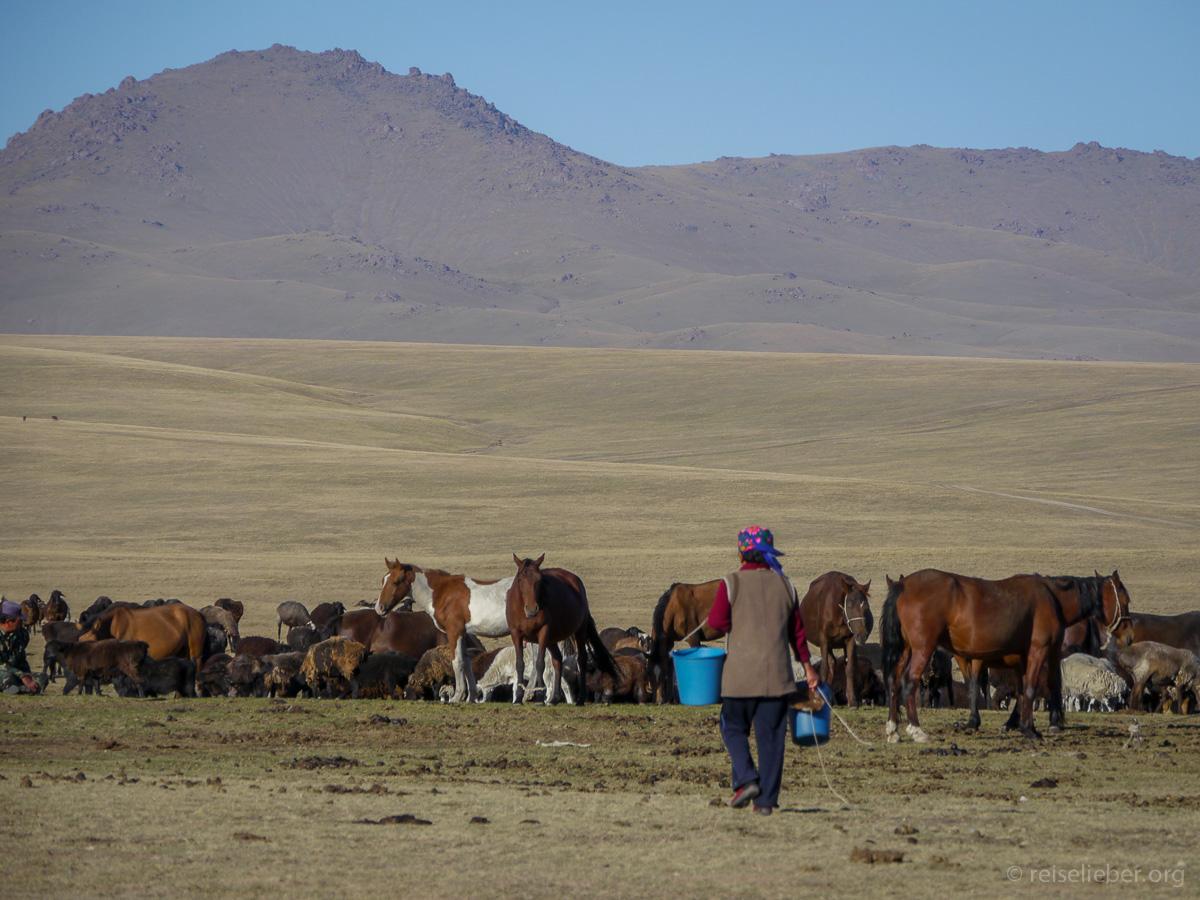20120829-kirgistan_song-kol_reiten_P1040897