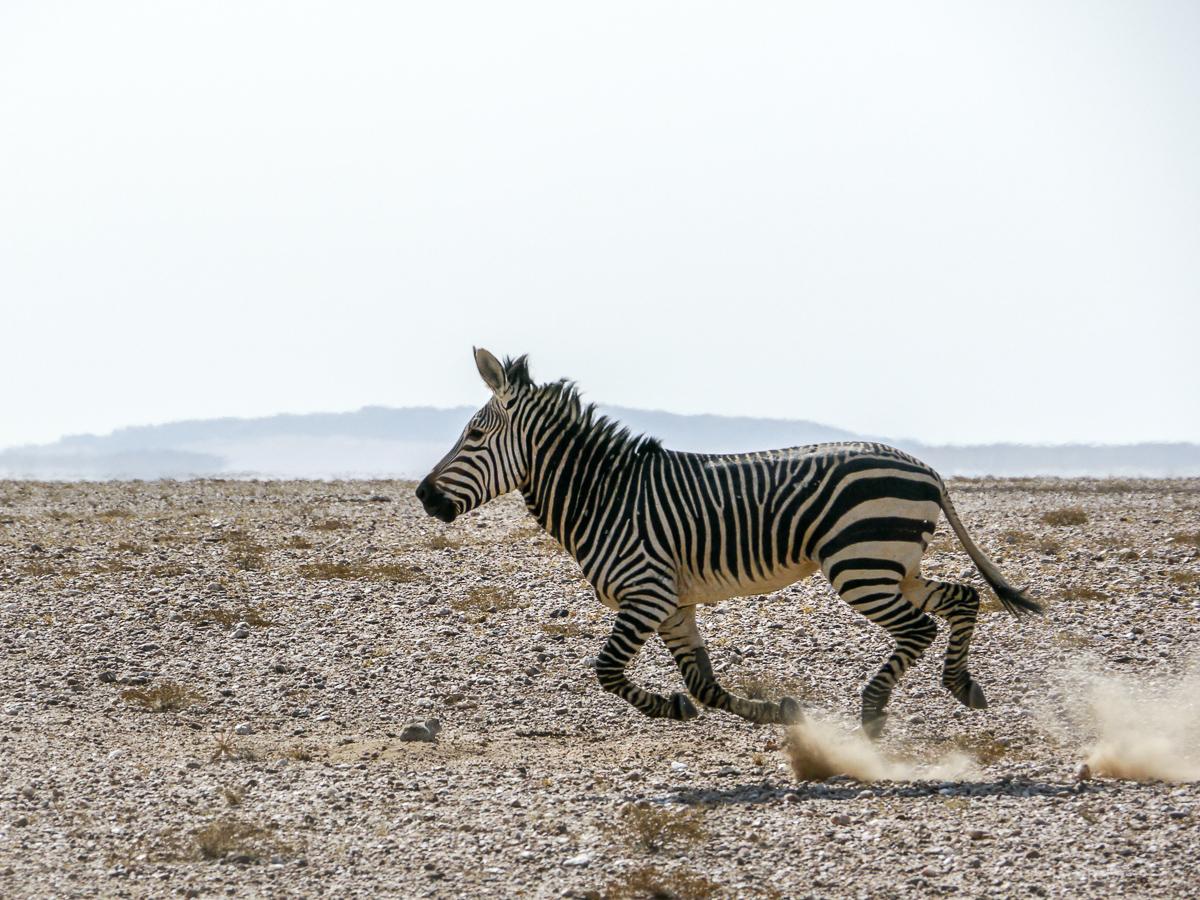 20141026_Namibia_Safariwahnsinn_P1120022
