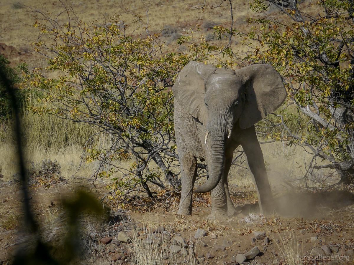 20141101_Namibia_Safariwahnsinn_P1120260