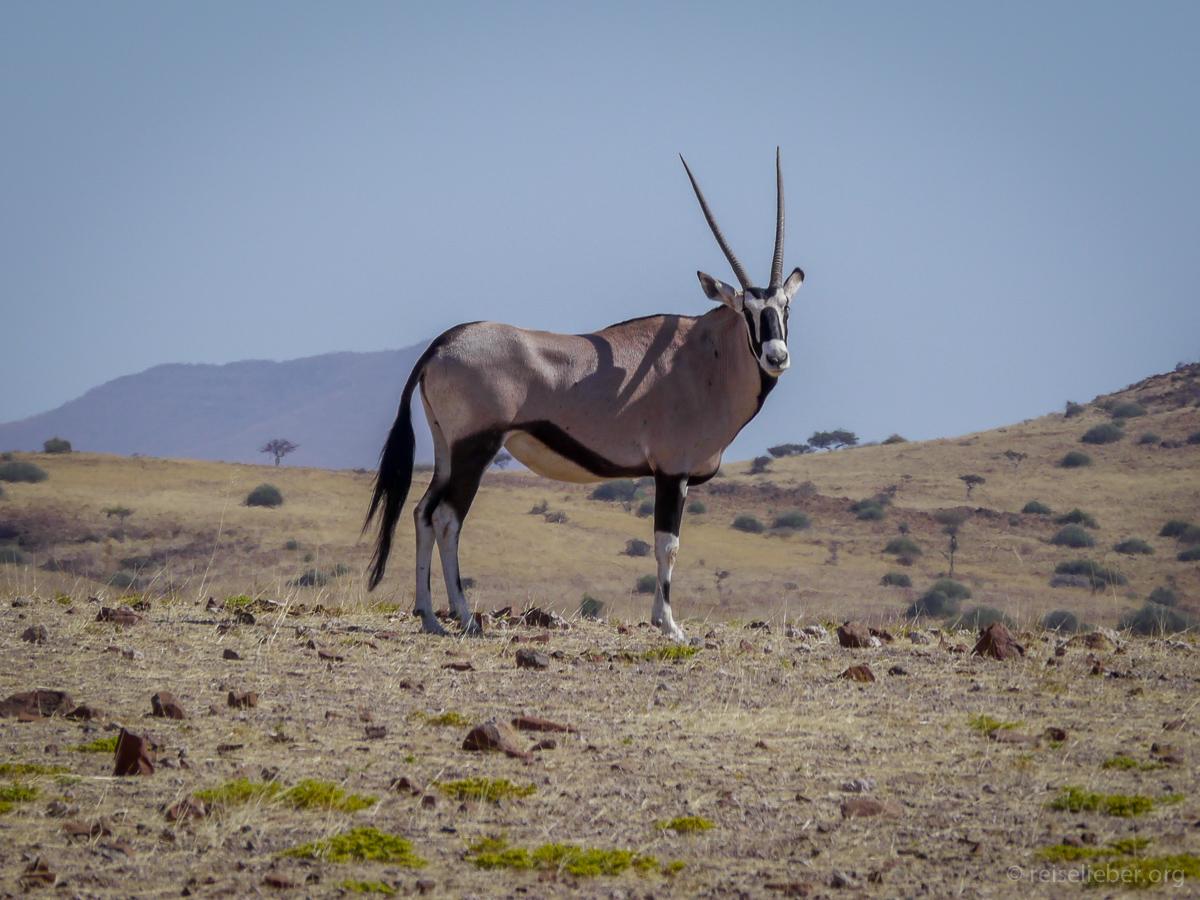 20141101_Namibia_Safariwahnsinn_P1120293