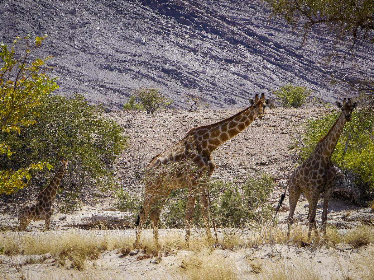 20141102_Namibia_Safariwahnsinn_P1120591