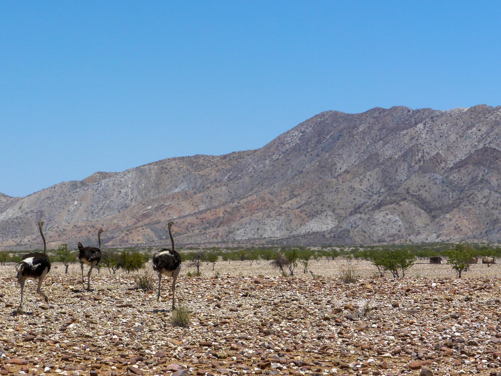 20141103_Namibia_Roadtrio_Chronik_P1120689