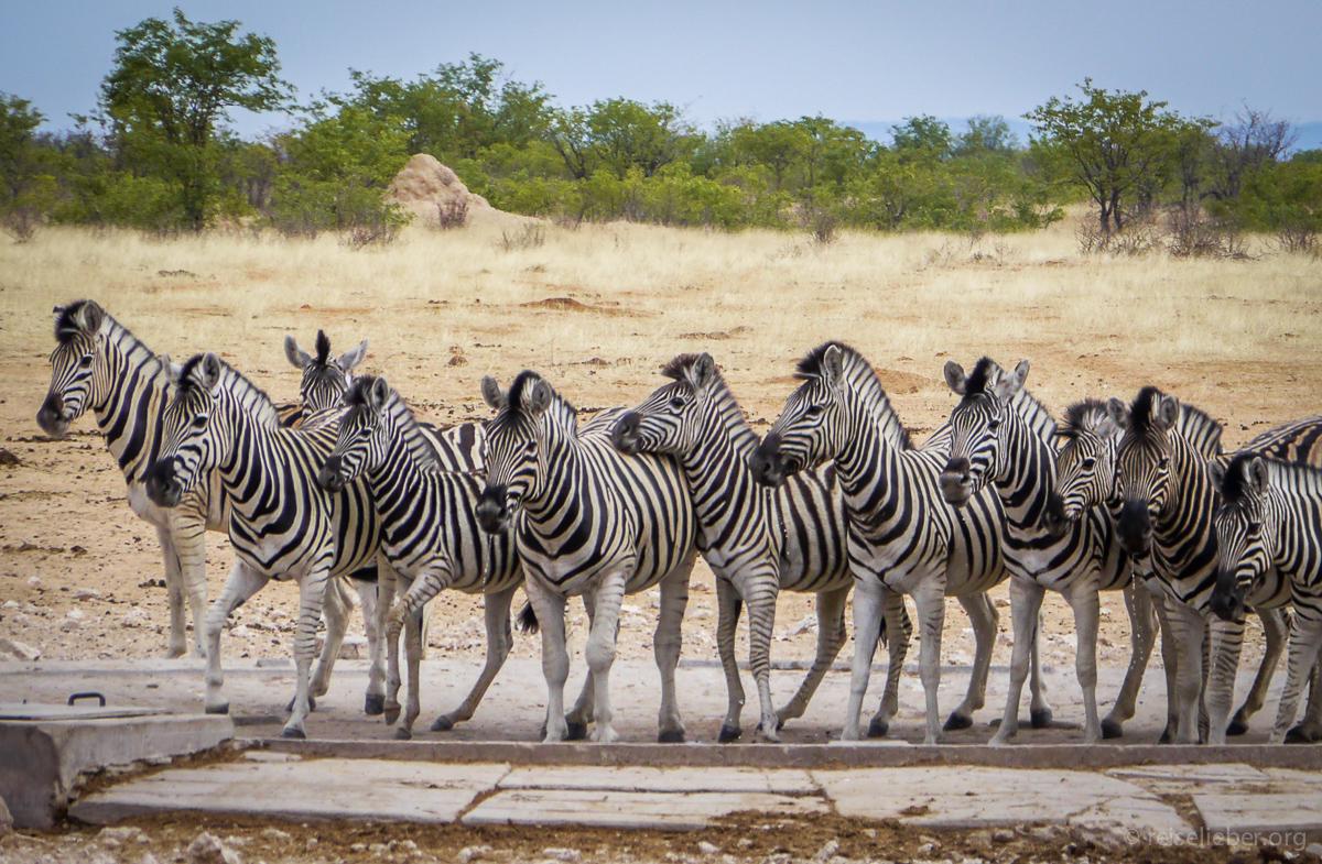 20141106_Namibia_Safariwahnsinn_P1120921