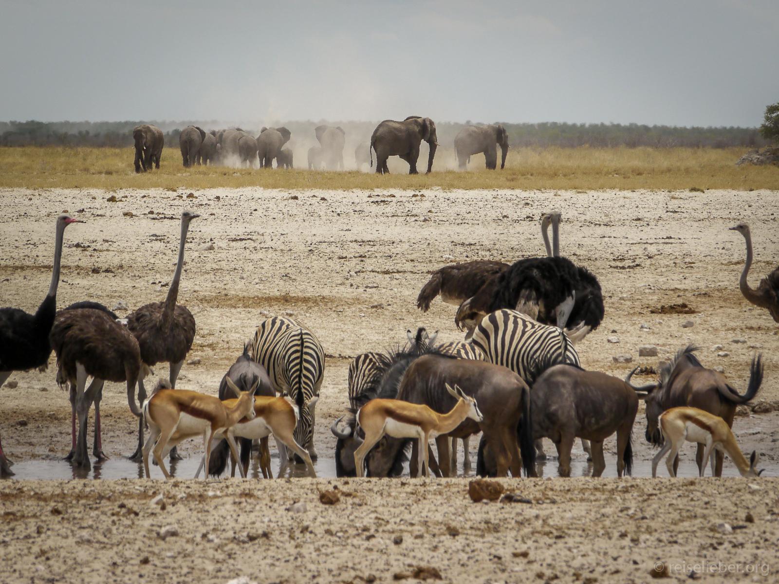 20141107_Namibia_Roadtrio_Chronik_P1130172