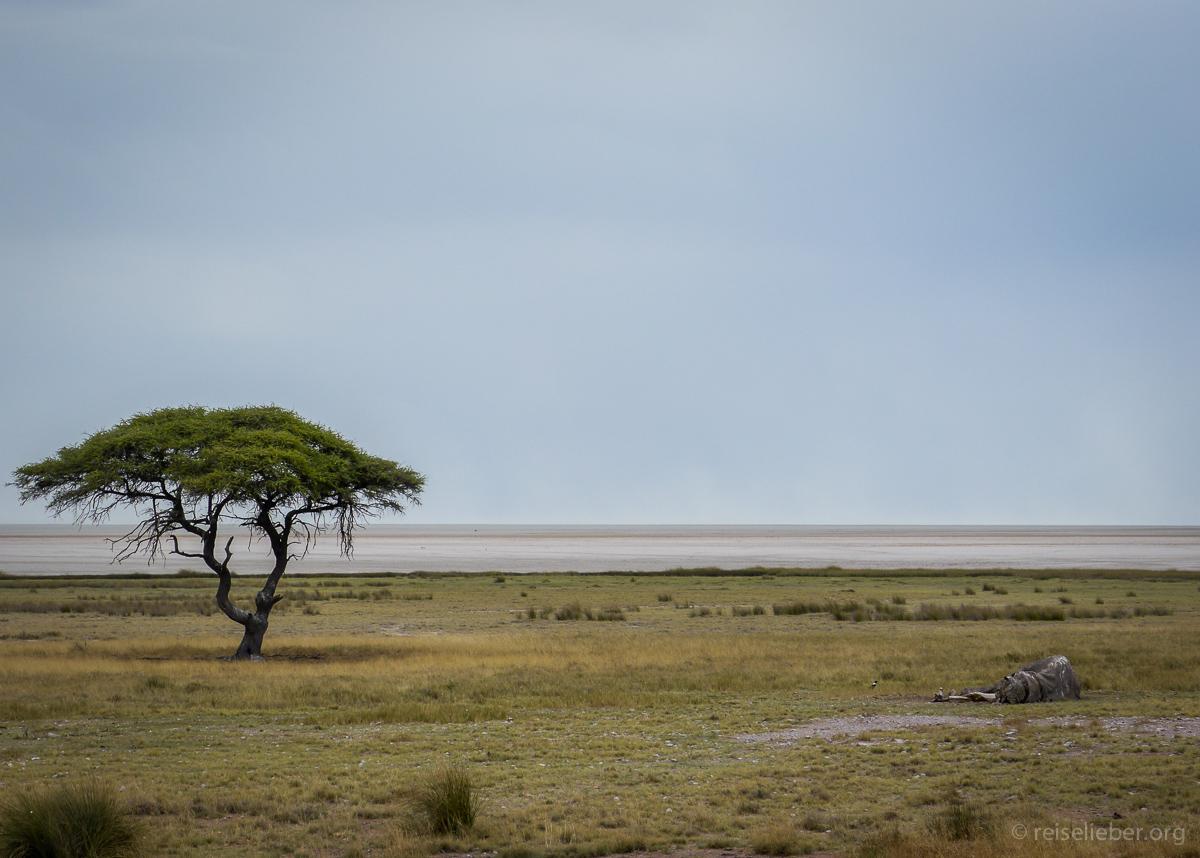 20141107_Namibia_Roadtrio_Chronik_P1130210