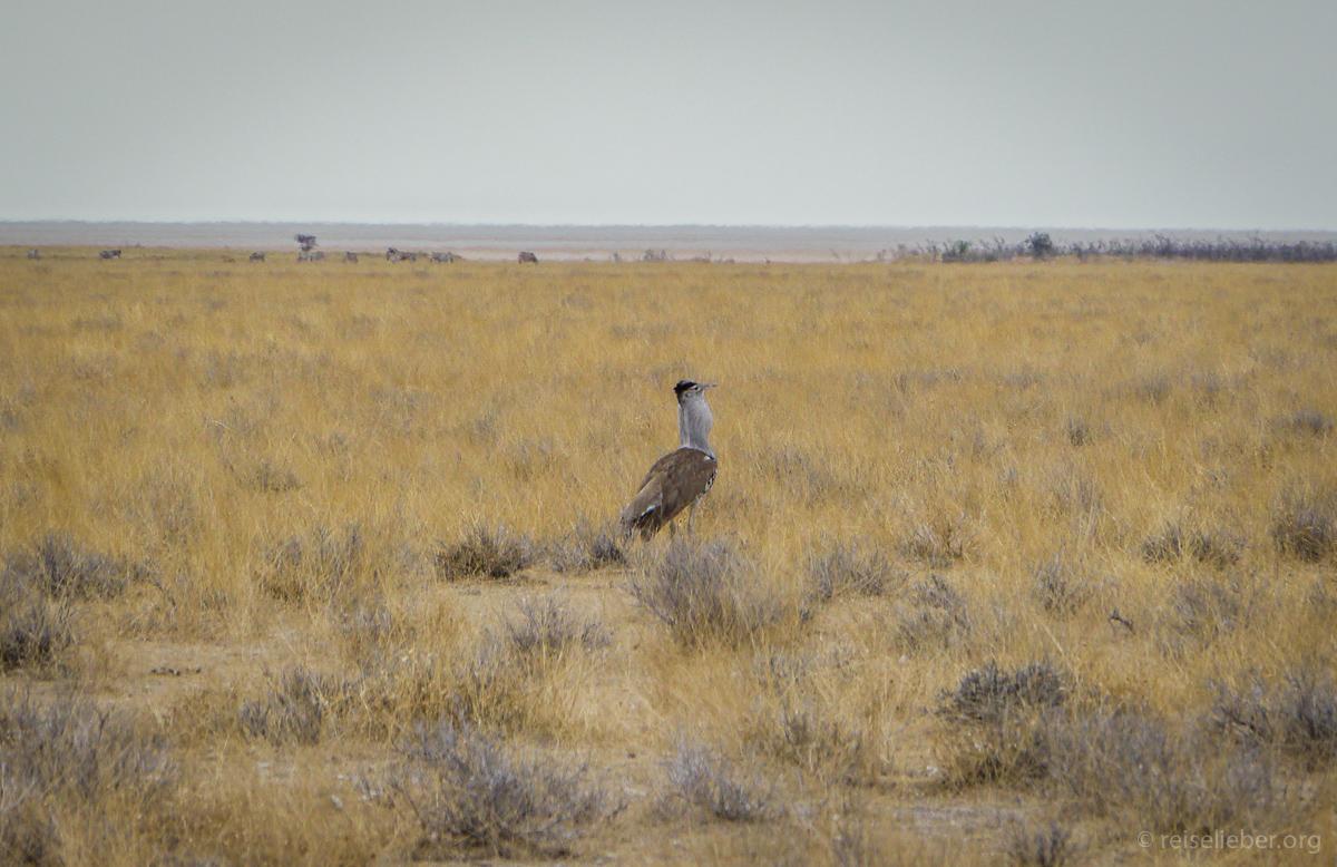 20141108_Namibia_Safariwahnsinn_P1130336