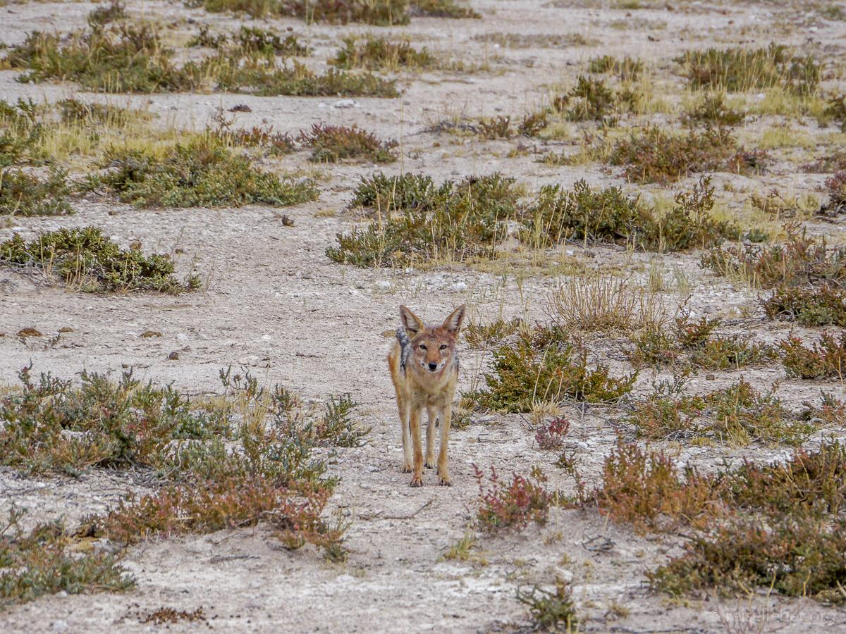 20141108_Namibia_Safariwahnsinn_P1130342