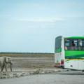 20141108_namibia_safariwahnsinn_P1130347_titel