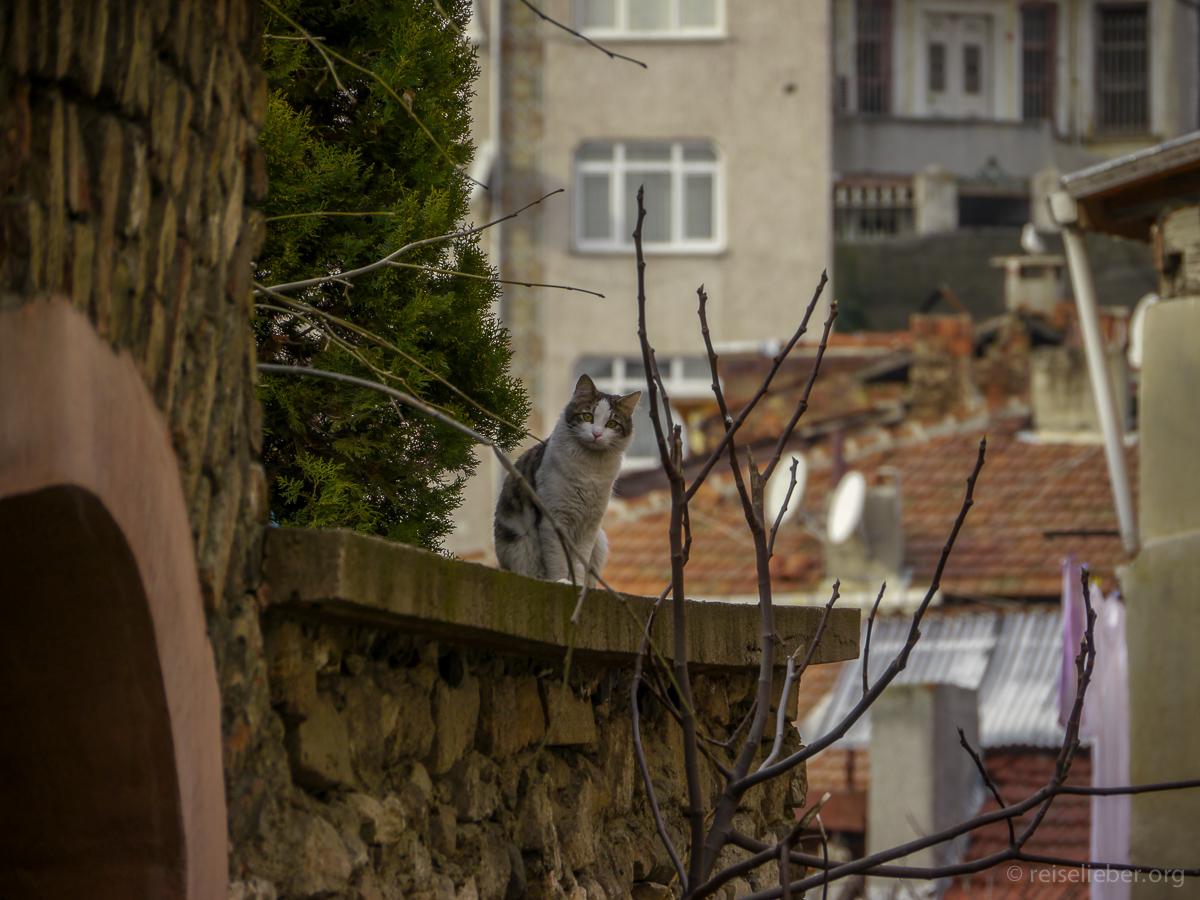 20150120_tuerkei-istanbul-balat_P1130530