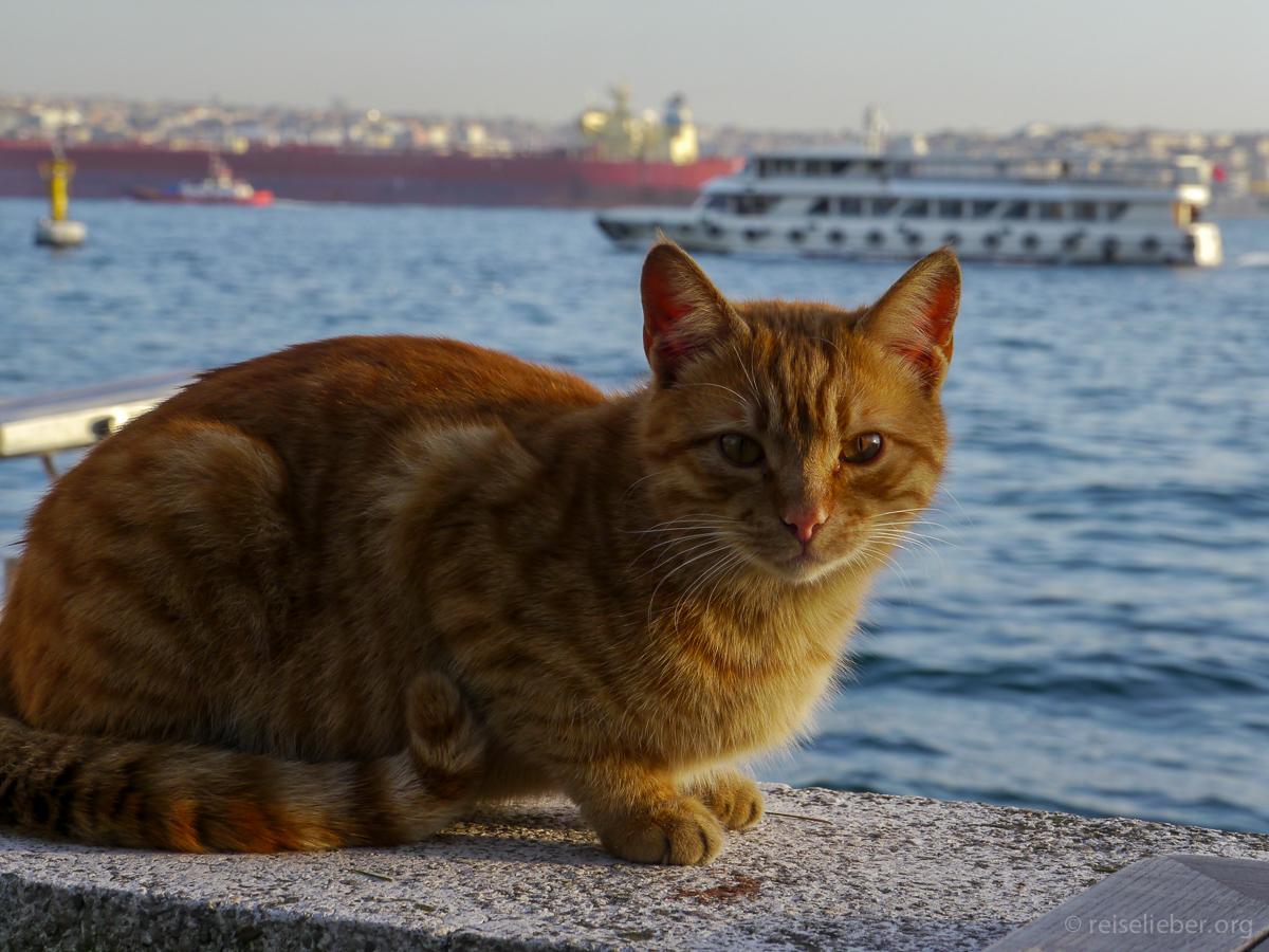 20150120_tuerkei-istanbul-dolmabahace_P1130675