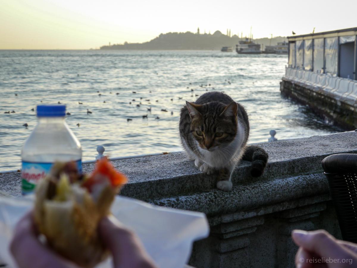20150120_tuerkei-istanbul-dolmabahace_P1130677