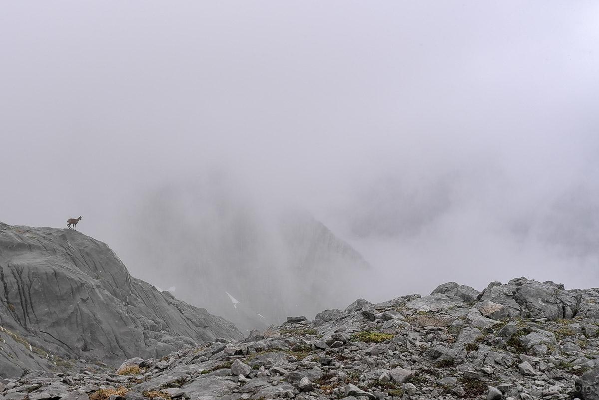 20150519-picos-de-europa_L1125382