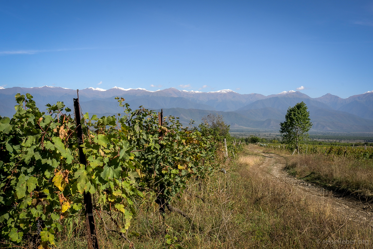 Wein in Kachetien, Georgien