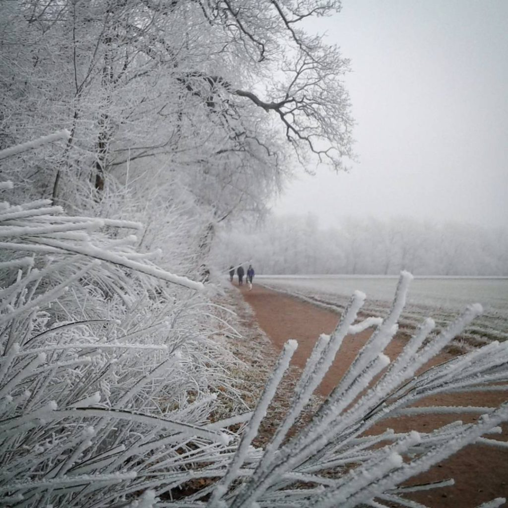 Frohes Neues!  Happy New Year! rauhreif frost wow winterhellip