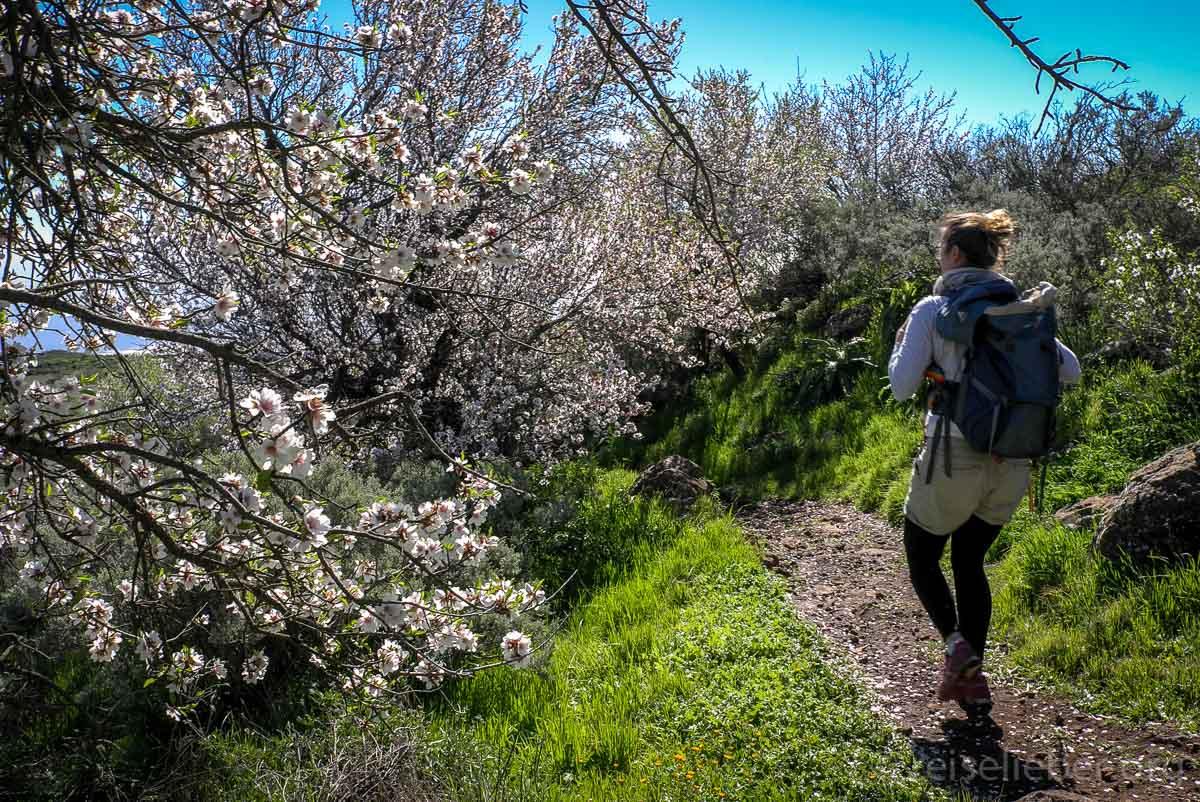 Mandelbaum blüte
