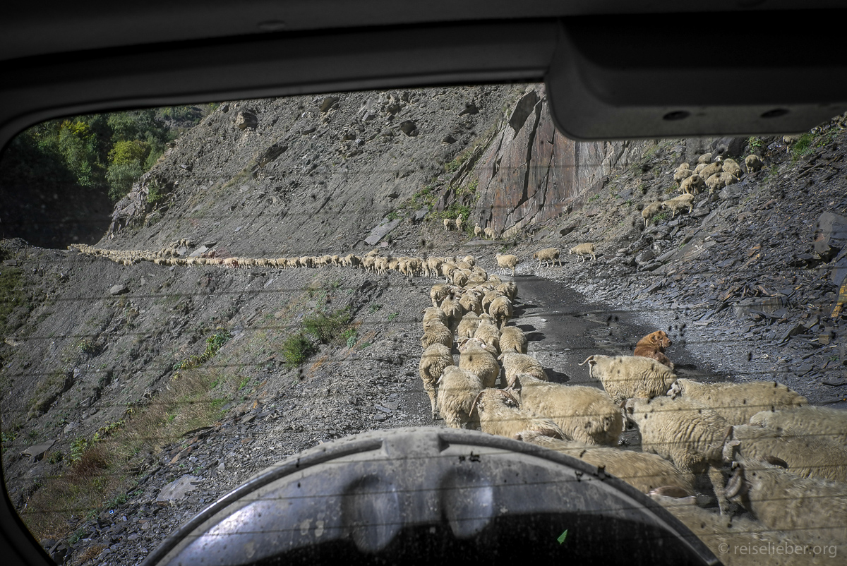 Schafe auf Straße in Tuschetien