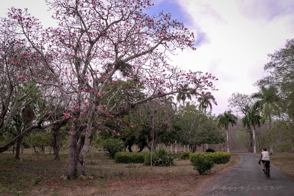 RAdfahren Im Botanischen Garten bei Cienfuegos