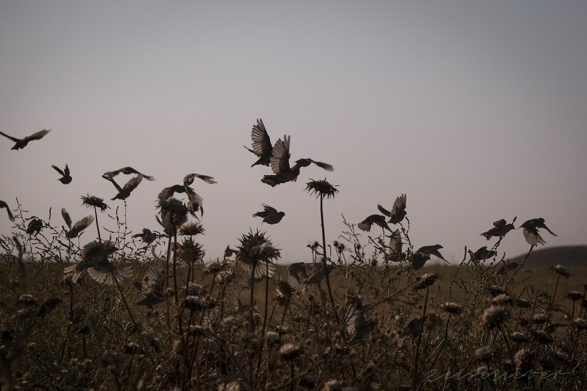 Vogelschwarm im Vashlovani Park