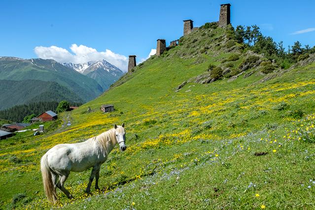 Pferd vor Wehrtürmen in Tuschetien