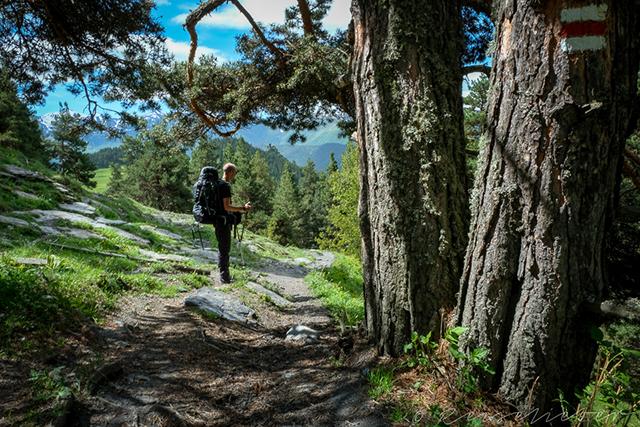 Wanderer im Wald in Tuschetien