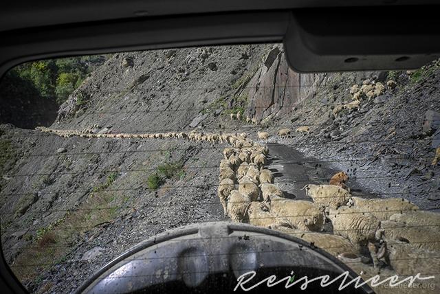 Viehabtrieb im Herbst in Tuschetien