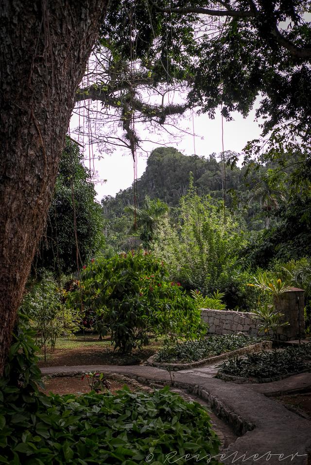 Orchideen-Garten in Soroa