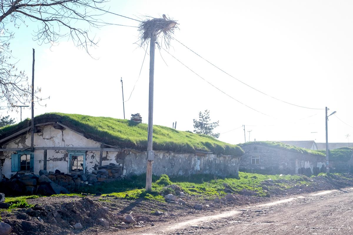 Storch vor einem Haus mit Grasdach