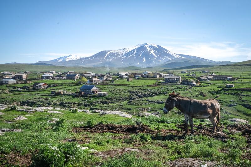 Esel vor Vulkanplateau