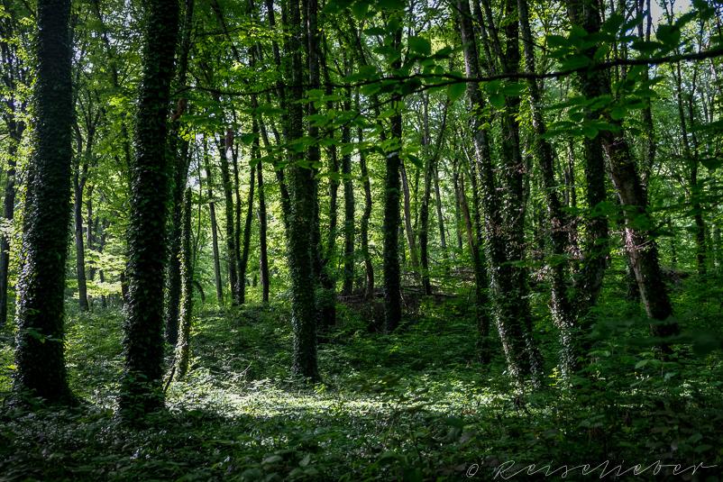 Wald im Lagodekhi-Nationalpark