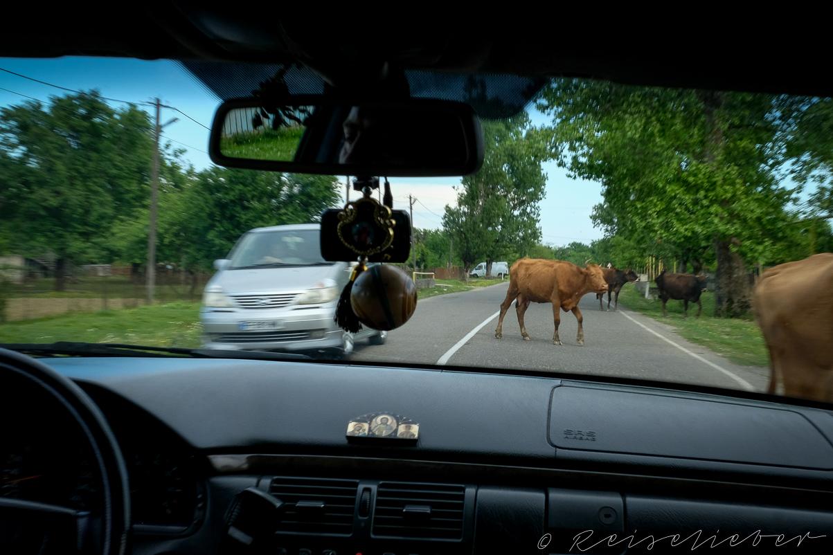Kuh auf der Straße, Ausflüge in die Umgebung von Kutaissi