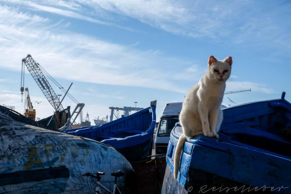 Katzen von Marokko