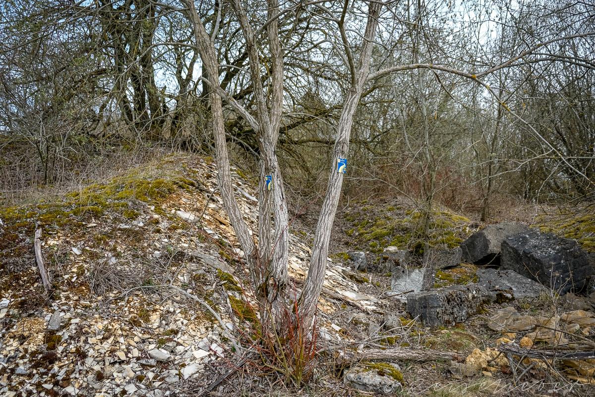 Ehemaliger Steinbruch an der Rundwanderung um Schernfeld