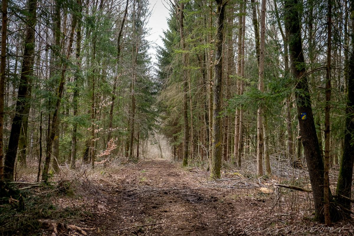 Waldweg am Rundwanderweg um Schernfeld