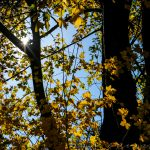 Herbstlaub im Beixenharter Naturwaldreservat im Urdonautal