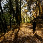 Wandern Beixenharter Naturwaldreservat im Urdonautal südlich von Dollnstein