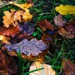 Herbstlaub im Urdonautal