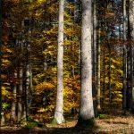 Herbstwald im Urdonautal