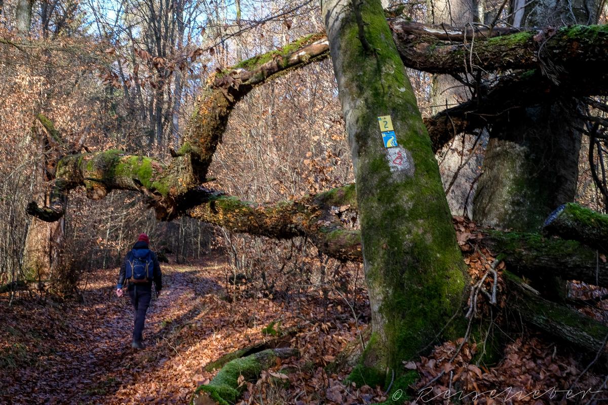 Waldweg nach Dollnstein
